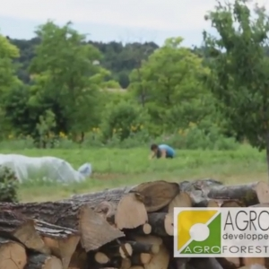 photo agroforesterie